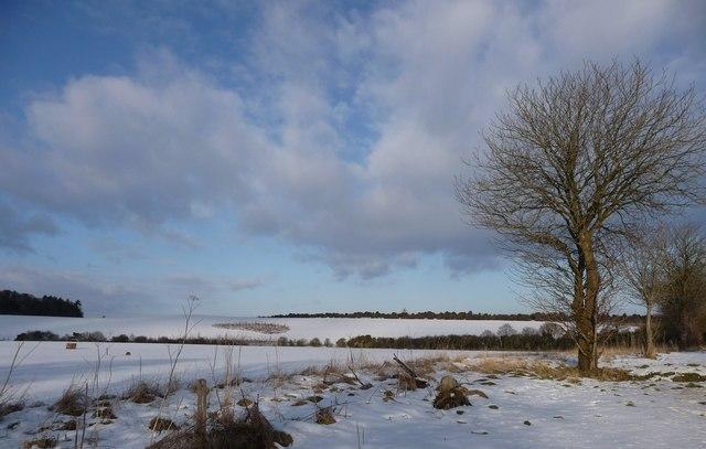 Kimpton_-_Snowy_Field_-_geograph.org.uk_-_1154337