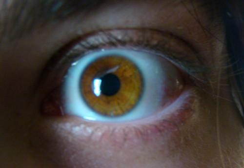 Amber_eye1