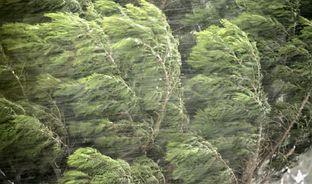 600w-trees-wind