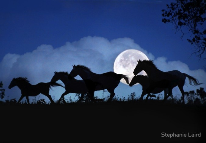 Wild Horse Herd in the Moonlight by Stephanie Laird